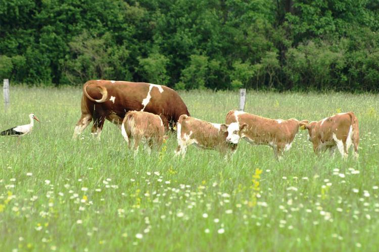 poljoprivreda.gov.hr