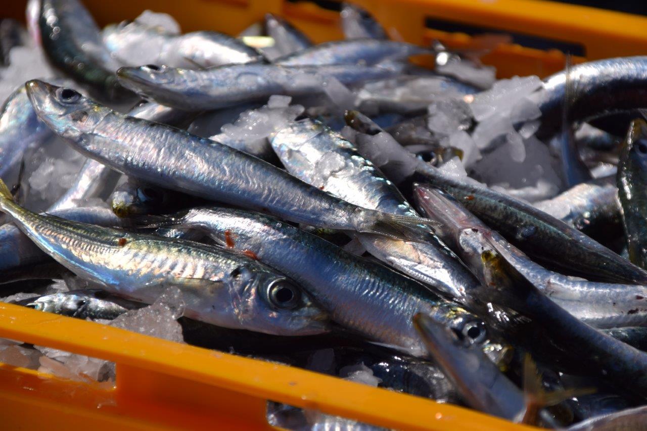 jednostavna upoznavanja s ribama