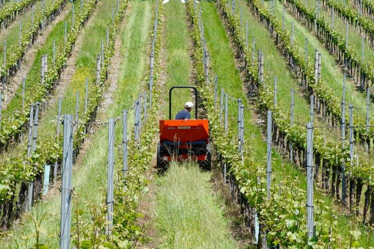 Ministarstvo poljoprivrede - Uskoro novi Javni natječaj za mjeru  Restrukturiranje i konverzija vinograda